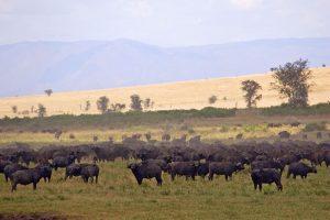 4 day kidepo valley wildlife safari