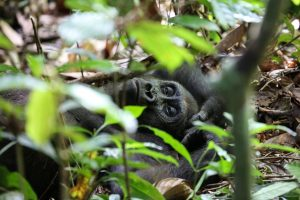 7 Day Uganda Adventure Gorilla Safari